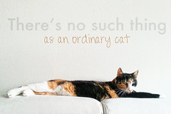 There's no such thing ... (jinterwas) Tags: cat kat free bank cc sofa creativecommons lying liggend lapjeskat freetouse