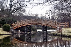 Bridge at the garden - 28/366 & 4/5 of 2016 (tjmorrison2) Tags: bridge garden 52 2016 dso 366 mobotorg ff58 52weeksthe2016edition week42016 weekstartingfridayjanuary222016outdoor