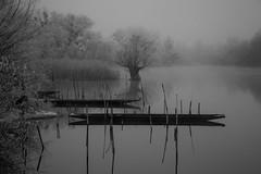 Good Times Gone (jacqueschoeffel) Tags: winter blackandwhite bw cold tree nature water monochrome fog canon eos eau frost noiretblanc hiver nb alsace extrieur arbre froid brouillard givre 70d