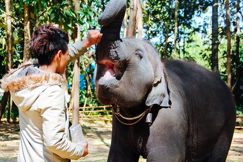 @Chiang mai, Thailand