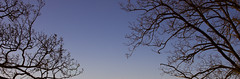 proteso (iltorosanto) Tags: sunset sky tree alberi tramonto albero ramo rami