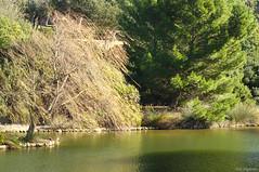 salice piangente (hiroy71) Tags: panorama tree verde green bird water colors animals landscapes colore shadows pentax ombre particular albero acqua luce cagliari k5 scorcio monteurpinu smcpentaxm50mmf17 giadinipubblici