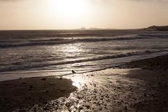 Ano Nuevo State Park-7998 ( / Jiayin Ma) Tags: california park beach water 1 sand state wave route ao ano nuevo seaocean
