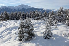 Perfect conditions (fxdx) Tags: trees winter snow forest perfect films covered conditions lf1