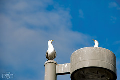 Birds 2 (vladimirspasic211) Tags: summer bird nature beautiful alaska day sunny anchorage