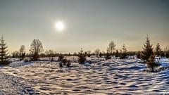 Fagnes - 05 - Sunny snow (Ld\/) Tags: winter mars sun snow nature march belgium belgique belgie ardennen ardennes sunny neige michel venn hoge malmedy hautes fagnes haute naturelle magie dcor hautesfagnes baraque 2016 ardenne venen hohes waimes barraque rserve frique jalhay