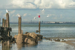 Bembridge Point...Isle of Wight (Charles Smallman) Tags: seagulls seascape beach sand isleofwight solent spinnakertower breakwater bembridge groins thesolent buoyant nikond800 charlessmallman