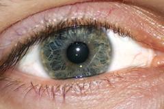 Eye - mosaicism color (filippo.bassato) Tags: macro eye occhi occhio iride bulbo pupilla ciglia fovea palpebre mosaicismocromatico mosaicismcolor
