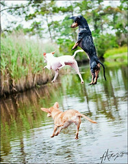 Swimming - #dogs fun time (PhotographyPLUS) Tags: pictures graphics photos illustrations images stockphotos articles footage stockimage freephoto stockphotograph