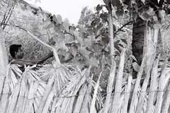 (Sbastien Pineau) Tags: blackandwhite bw india man blancoynegro film monochrome analog garden noiretblanc jardin nb scan scanned analogue hombre tamilnadu rameswaram homme argentique inde jardn pineau analogic scaner pellicule argntico sbastienpineau