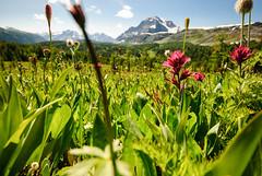 Healy Pass Daytime (huitlacoche) Tags: canadianrockies healypass