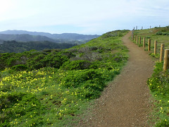 3/8/16 10:12 (joncosner) Tags: california flora paths southbay pacifica ggnra 2016 stars2 milagra