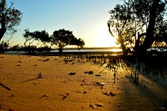DSC_0027 (RUMTIME) Tags: light sunset beach nature sand mangrove queensland coochie coochiemudlo