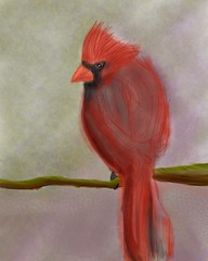 Draw a #bird day.  Sketchbook Pro on iPad. (Howard TJ) Tags: bird square cardinal drawing squareformat ipad instagramapp