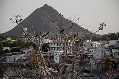 Pushkar (Jackson Pollard) Tags: travel trees sunset india lake mountains nature birds river landscape asia wildlife religion hindu hindi rajasthan