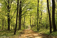 Spring Greens (maureen bracewell) Tags: trees france green nature sunshine walking spring track peaceful april shaddows maureenbracewell daarklands