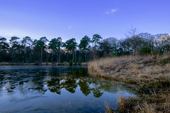 Trees growing in the water (Pascal vd Wassenberg) Tags: park blue trees winter light red sky cloud white lake plant abstract holland reflection tree green art texture ice nature wet water netherlands field grass yellow skyline clouds forest river landscape outside photography nice long quiet fotografie view dynamic little outdoor good sony air tripod ngc wide nederland natuur sigma ground wideangle frosty awsome foliage filter serene plain 1020 oisterwijk landschap noordbrabant natuurmonumenten pinetum cokin distanse oisterwijkebossenenvennen