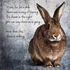 More Than This (Jeric Santiago) Tags: pet rabbit bunny animal lyrics conejo melancholy lapin hase kaninchen roxymusic うさぎ 兎 morethanthis winterrabbit