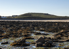 looking towards Fort Albert from Fort Raz, Alderney (neilalderney123) Tags: landscape tide olympus alderney raz fortalbert longis 2016neilhoward