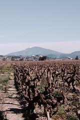 Coteaux du Ventoux (Alexandre_SL) Tags: hiver paysage vigne ventoux