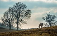 _DSC8170 (Rosemarie Dekert) Tags: winter field animals march berkhamsted 2016 horsesandponies berkhamstedcommon