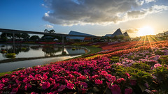 Epcot - Sunbeans over Flowers (Jeff Krause Photography) Tags: park sunset lake flower festival clouds garden lens us orlando epcot unitedstates florida cloudy disney flare theme imagination monorail wdw partly