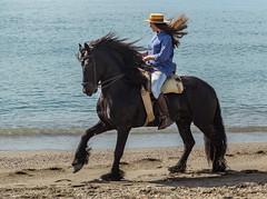 Malaga (Pieter Mooij) Tags: horse andaluca spain es andalusia pferd blackhorse mlaga spanje paard amazone