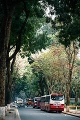 Mu thng 3! (hanoitranviet) Tags: street tree nature zeiss nikon hanoi otus d810 zf2 otus1455