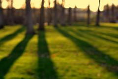 spring, in blur (joy.jordan) Tags: trees light sunset blur spring shadows bokeh oof