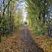 Bury St Edmunds In Autumn