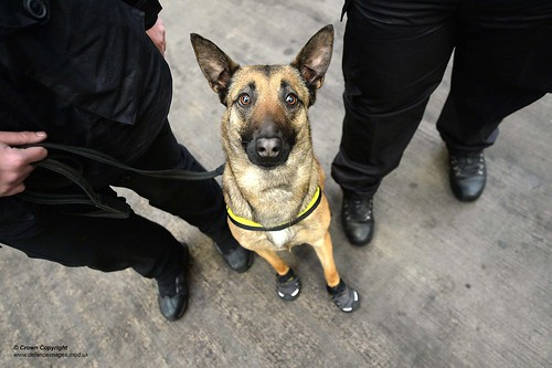 Military Working Dogs put to the test in Edinburgh