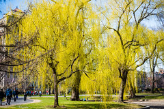 Boston Common in Early Spring (kuntheaprum) Tags: spring bostoncommon statehouse