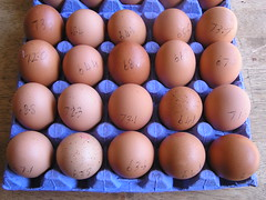 Dunnes Stores Better Value 20 Large hen Eggs 21052016 3.50 01-05-2016 - Tray 2 Egg Weights (Lord Inquisitor) Tags: brown eggs hen dunnes eggcarton eggbox heneggs eggweights 21052016