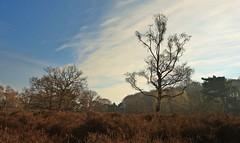 Sunny sping (M a u r i c e) Tags: sky tree nature netherlands sunshine landscape spring heather loosdrecht efs1022mm