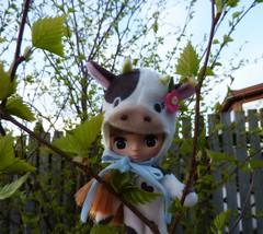 Baby Birch Leaves 92/365 (Bebopgirl1969) Tags: tree leaves cocoabutter petiteblythe