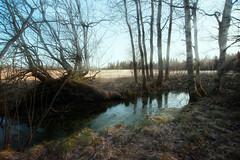 Lichtblicke im Moor - spots in the Moor (Rainer Schund) Tags: world nature water nikon wasser nebel im natur moor wald morgen moos morgens waschtag lichtblicke nikond700 naturemasterclass natureexploring