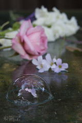 Bubble and Flowers (Photos By Michi) Tags: pink stilllife white flower floral rose spring flora purple blossom lavender sage bloom snapdragon