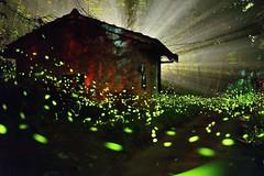 Fireflies ~~  (Shangfu Dai) Tags: 50mm nikon taiwan  af formosa  firefly d800  f18d