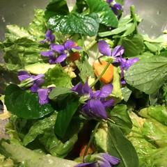 salad with avacado and violets (karenchristine552) Tags: food usa philadelphia westphiladelphia pa philly westphilly universitycity iphone cedarpark cookingdinner