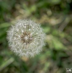 119/366 - Looking down (burberi (detta Buf)) Tags: flowers nature spring nikon daily fiori nikkor springtime 2485mm beuf d7000 burberi captureyour365