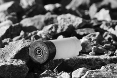 Calibre 12 Gauge (frankthewood63) Tags: white black gun noir blanc cartridge cartouche fusil