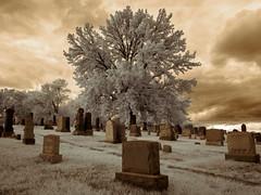 Tree of Life, Tree of Death (Adventures in Infrared) (Torsten Reimer) Tags: nyc newyorkcity sky friedhof usa newyork tree cemetery graveyard brooklyn clouds us unitedstates unitedstatesofamerica himmel wolken queens infrared northamerica gravestones infrarot cemeteryoftheevergreens olympusepl5