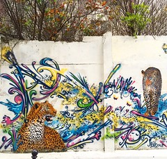 #panther #leopard by #mosko #moskoetassocies & #anis x LF #savana #savane #bagheera #streetart #graffiti #graff (pourphilippemartin) Tags: streetart graffiti leopard graff panther anis bagheera savana mosko savane moskoetassocies