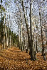 DSC00016.jpg (elmayimbe) Tags: de deutschland europa pflanzen aachen baum nordrheinwestfalen schneeberg buche objektive takumar3524mm