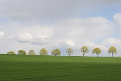 Row of spring trees (Xtraphoto) Tags: trees light tree green yellow clouds spring wolken row gelb grn bume baum frhling reihe baumreihe rowoftrees