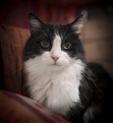 Portrait (I hope for humanity) Tags: nikond750 cruiseraurora cat