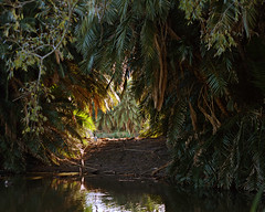 Centennial Parklands (Mike R Chalmers) Tags: park colour film landscape centennial pentax sydney australia hills surry nsw portra