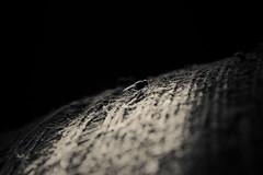 (Ivn Rubn) Tags: old light brown luz caf monochrome sepia fly time minimal nostalgia rincones instant minimalismo viejo longing corners tiempo instante insecto volar monocromtico delicado nimio impasible impasive