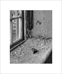 Windowsill Detritus (lclower19) Tags: bw white black lawrence massachusetts frame windowsill hdr stonemill