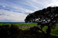 CASTILLA VESTIDA DE PRIMAVERA (marthinotf) Tags: espaa primavera paisaje valladolid nubes cielos cereales castilla composicin encina castillayleon villabaez camposdecereales